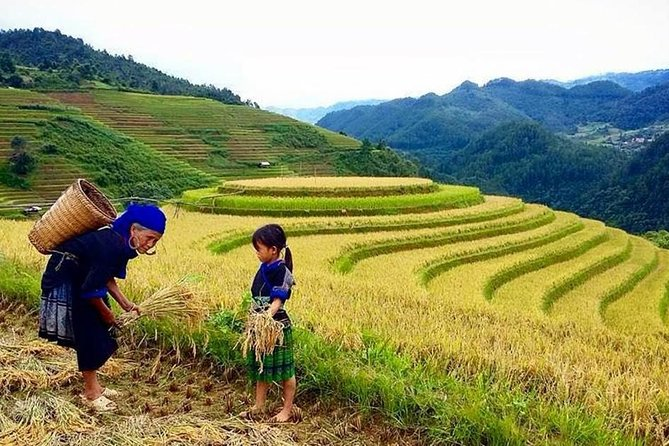 1 day Muong Hoa, Ta Van trekking with lunch, tour guide, entrance fees