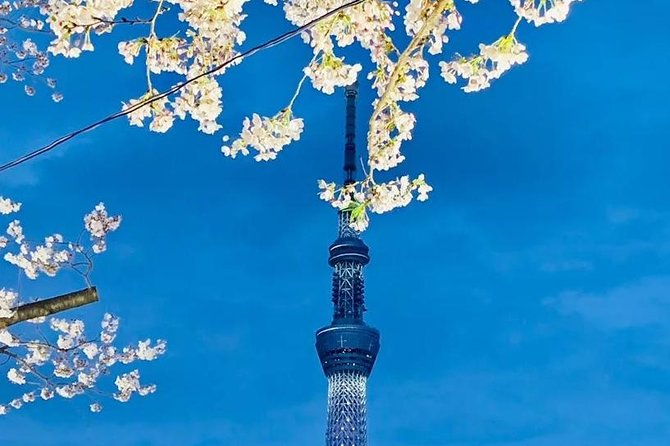 1 Day Private Charter Tokyo Sight Seeing Tour English Speaking guide