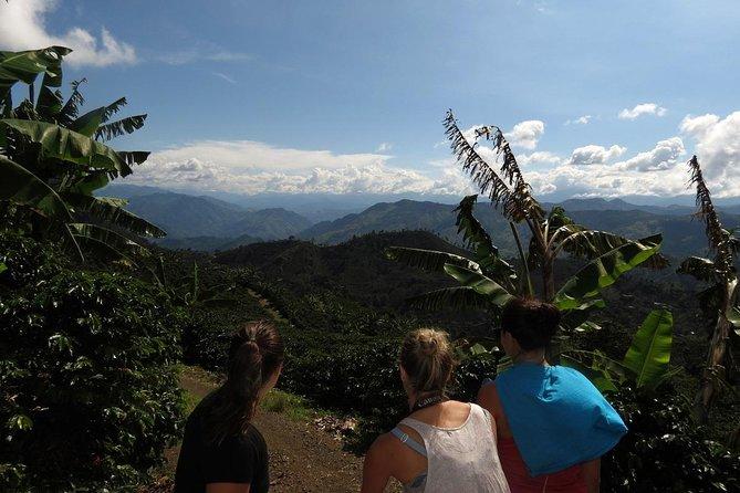 Medellín Coffee Tour to Concordia