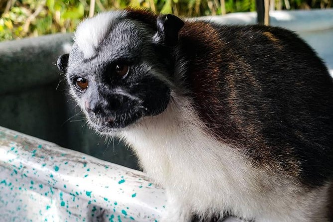 Full-Day Monkey Island and Indian Village Tour from Panama City, Panama