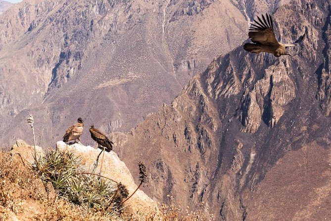 View Of The Condors In Chonta Canyon Full Day Tour