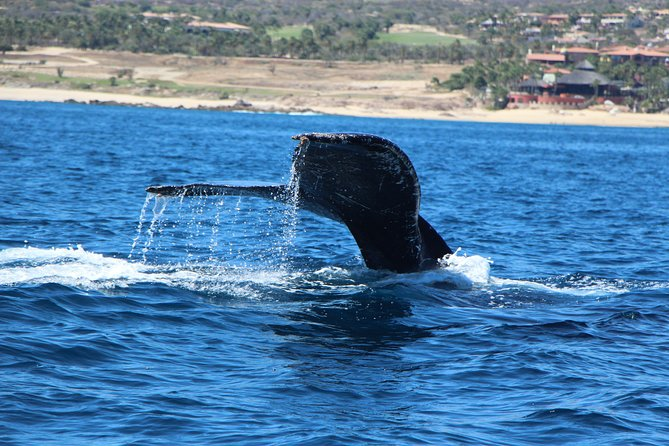 Luxury Private Boat, Cabo Bay, Land's End Arch, Swim or Snorkel its your time!