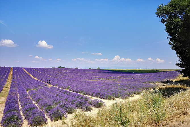 Private Day Trip to Manosque Valensole Moustiers Ste Marie and Lake Ste Croix from Nice