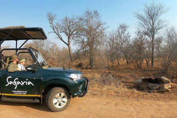 Premium Kruger Park Full-Day Safari