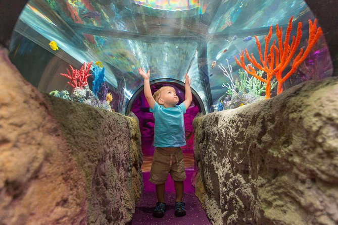 Skip the Line: SEA LIFE Michigan Aquarium Admission Ticket