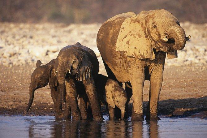 4-Day Namibia Etosha Safari from Windhoek or Swakopmund