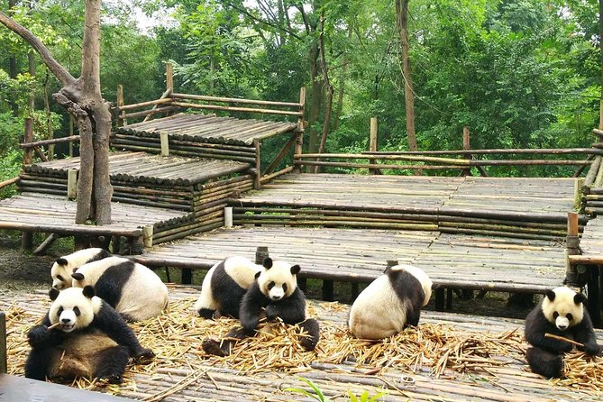 Private Day Tour: Visit Giant Pandas and Discover Shu Culture in Chengdu photo 3