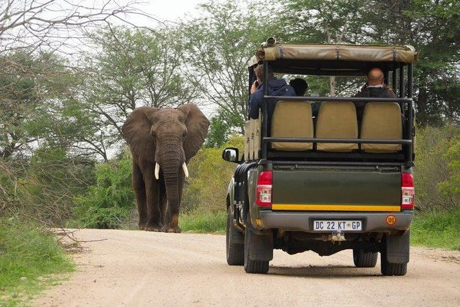 Private Half Day Kruger National Park Open 4x4 Safari Vehicle Rental With Guide