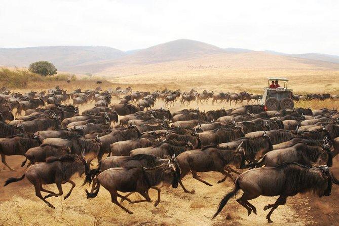 Kenya Safari For Couples: Luxury & Romantic African Bush Adventure