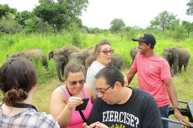 Day Tour to Minneriya Safari and Sigiriya rock photo 1