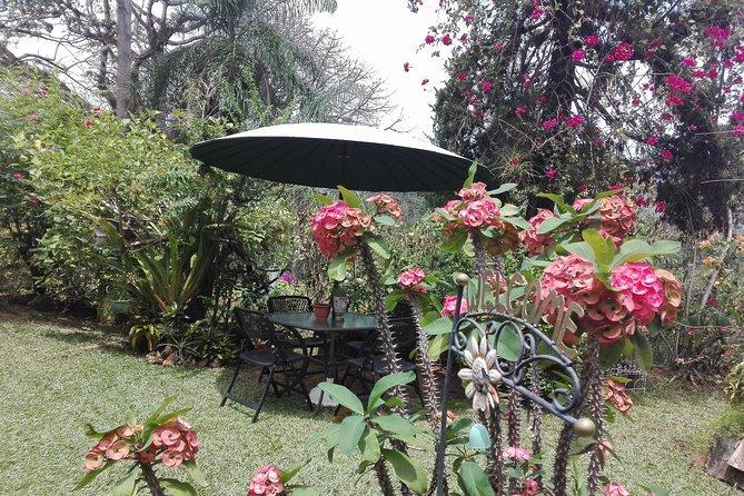 Yerette Home of the Hummingbird