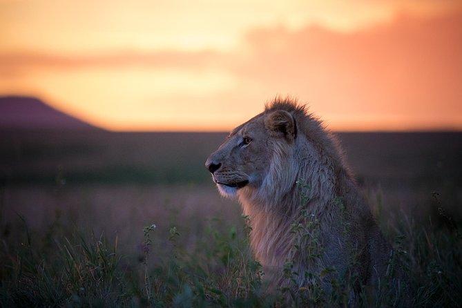 Authentic Tanzania Budget Safari