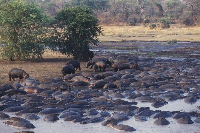 4-Day Katavi National park Guided tour from Arusha