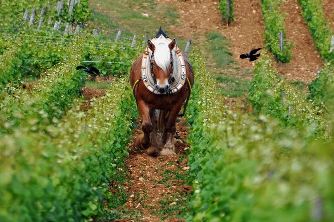 Full-Day Private Tour: Wine Tasting, with 6 Grands Crus The Best of Burgundy
