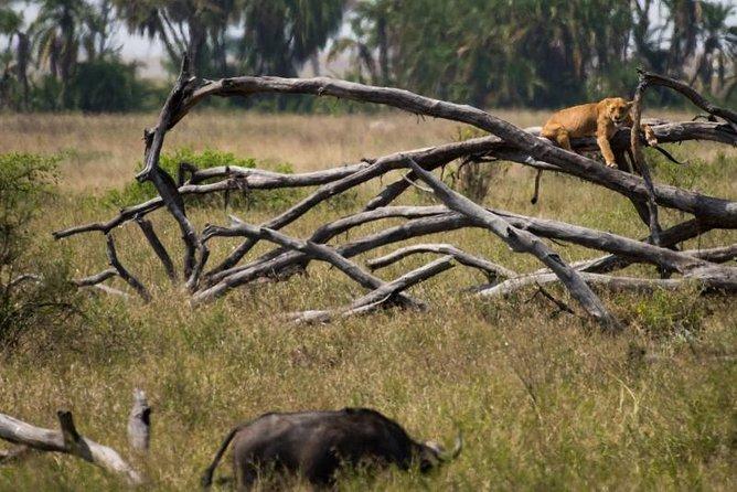 12 Days 11 Nights Taste Of Northern Tanzania Safari And Zanzibar