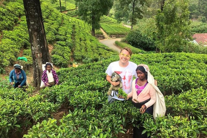 2 -Days private tour to Nuwara Eliya from Colombo