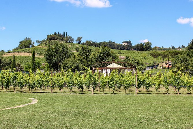 San Gimignano: Barbeque Wine Event Lunch photo 10