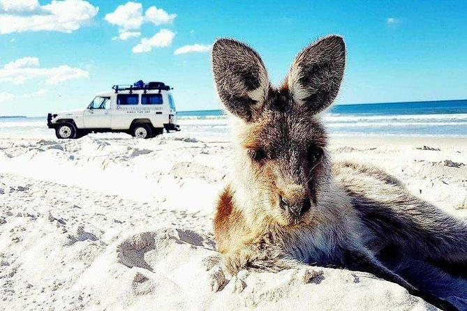 Bribie Island Adventure Tour (Brisbane Pickup)
