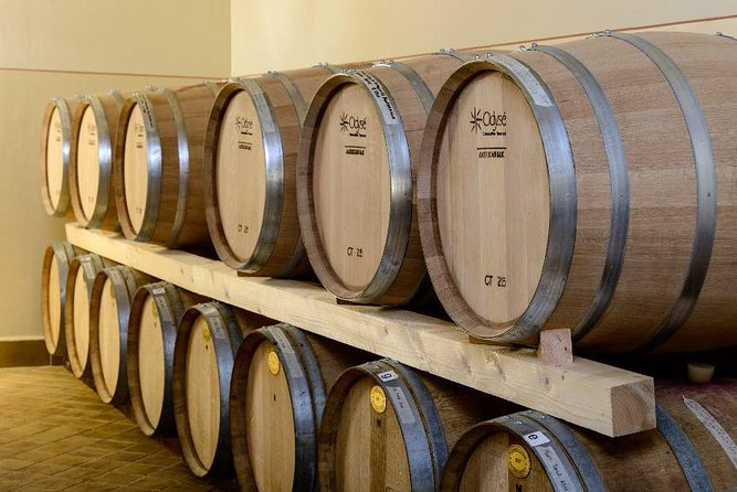 Montefalco: Winery and Oil Mill Tour in with Lunch