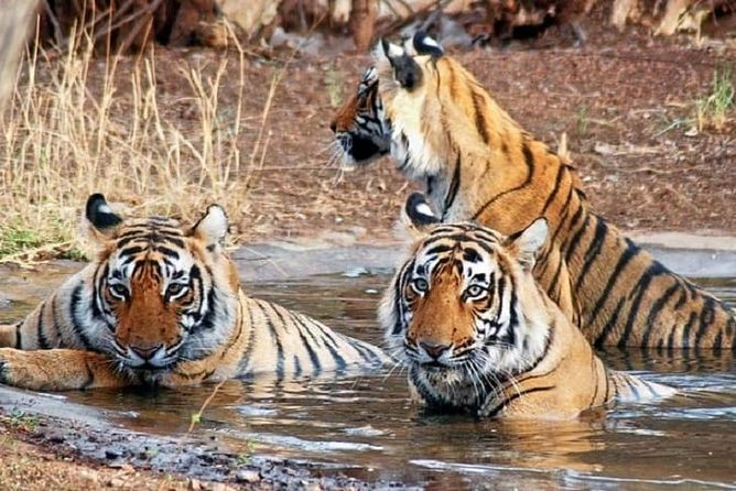 Private 6-days Tour Delhi, Jaipur, Ranthambore Safari And Agra With Tajmahal