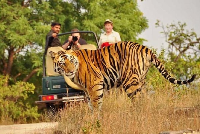 5-Day Private Delhi, Agra and Jaipur with Ranthambhore Tiger Tour From Delhi