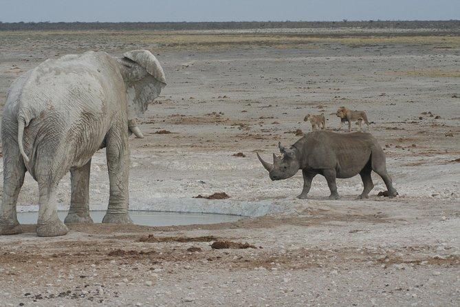 Elephant and Rhino at waterhole in Etosha