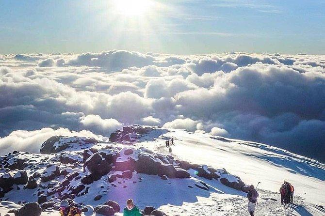 Summit Africa (Mt Kilimanjaro) 7days lemosho route hike
