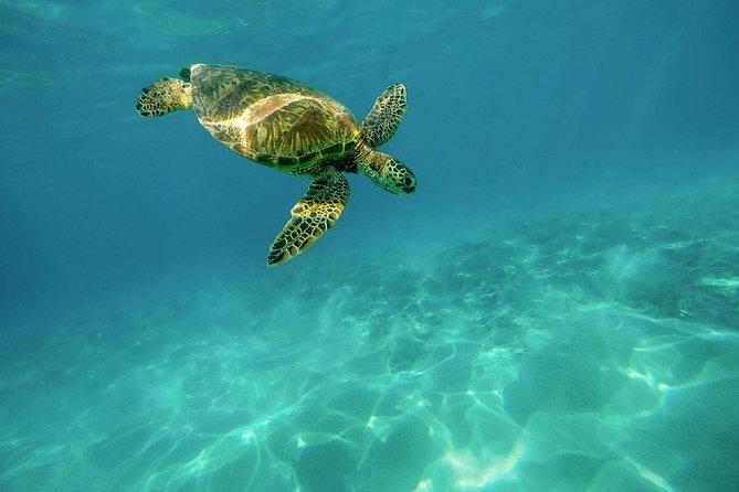 Caretta-Caretta Turtle Trip