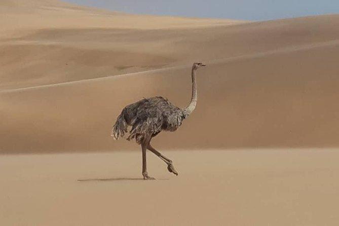 Namib Desert and wildlife photography tour