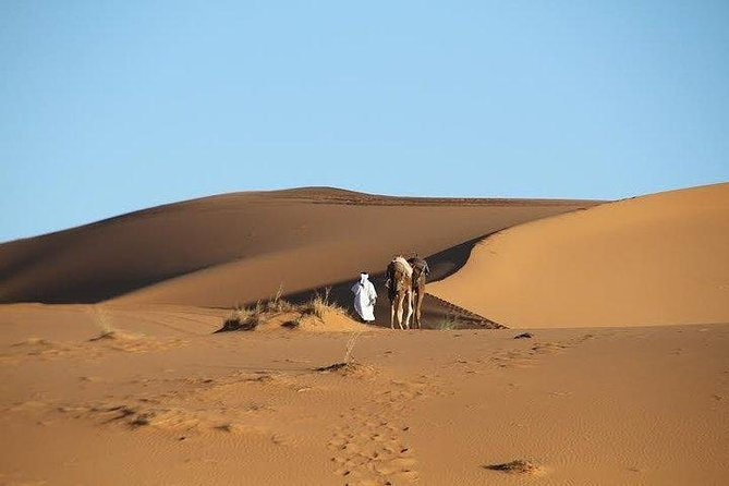 Camel ride and Luxury Camp Night in Merzouga