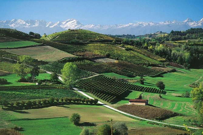 3 Nights Langhe Experience: Food Wine and Truffles in the Barolo and Barbaresco Regions