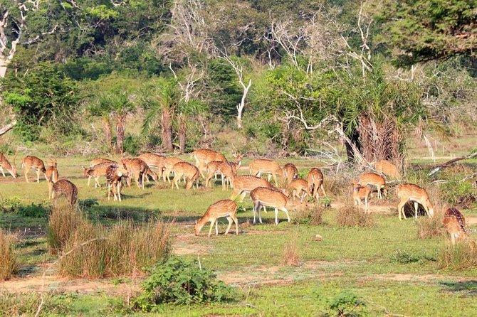 Wilpattu Safari Drive From Trincomalee, Nilaveli & Suburbs