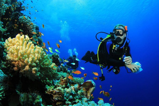 Menjangan Island Bali Diving Activity