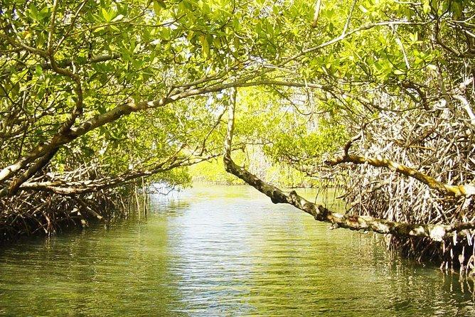 Mangrove Lagoon Tour in Cancun