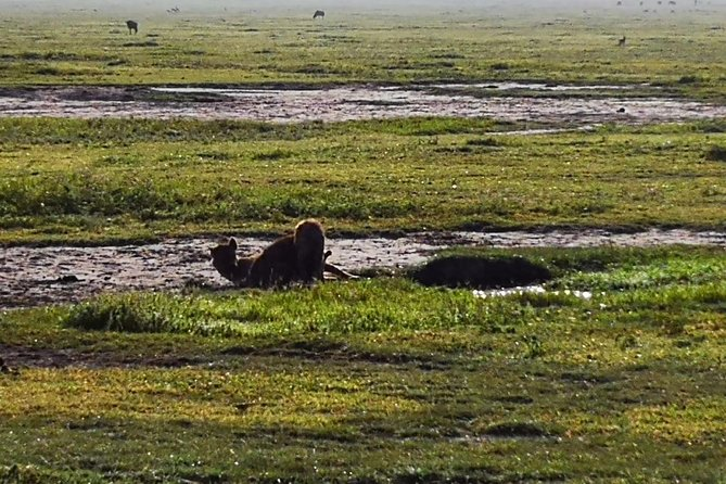 4 days Budgeted Safari Serengeti