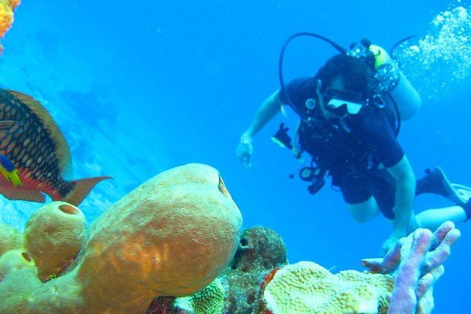 Scuba Diving Experience in Rosario Islands