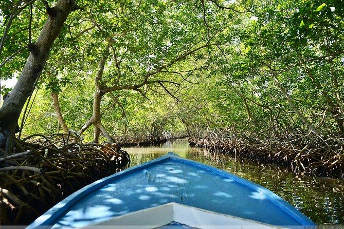 Roatan Mangrove Cultural Experience
