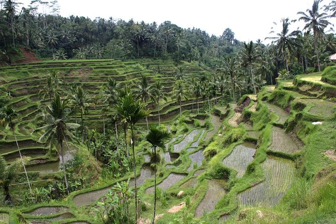 Private Half Day-Tour: Ubud Art Village Tour