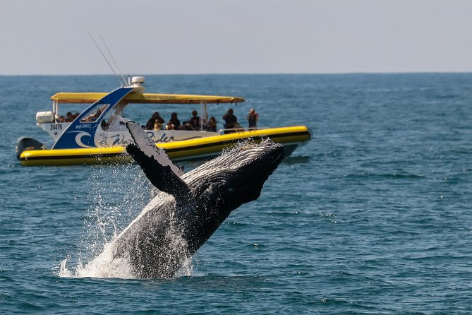 Whale Watching Wave Rider
