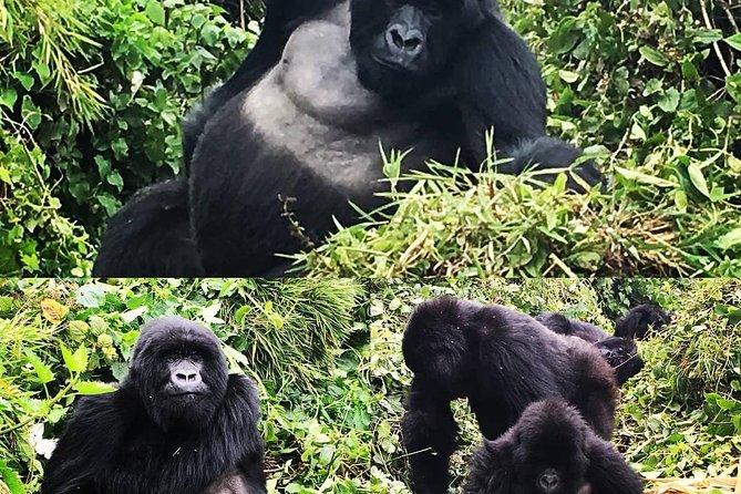 3 Days Rwanda Gorilla Trekking Budgeted Tour