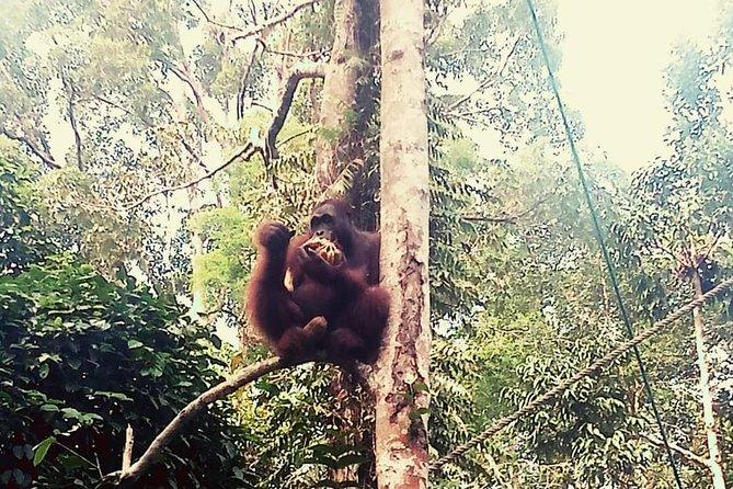Semenggoh Orangutan avec Rainforest Kayaking de Kuching