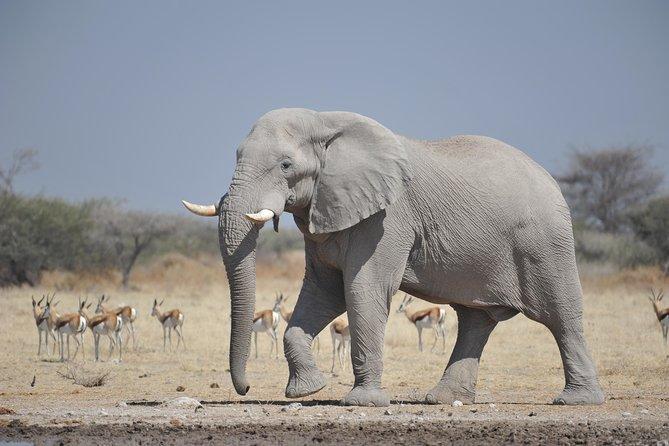 Victoria falls and Chobe safari