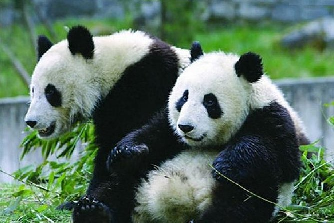 Private Day Tour to Beijing Panda House and Summer Palace