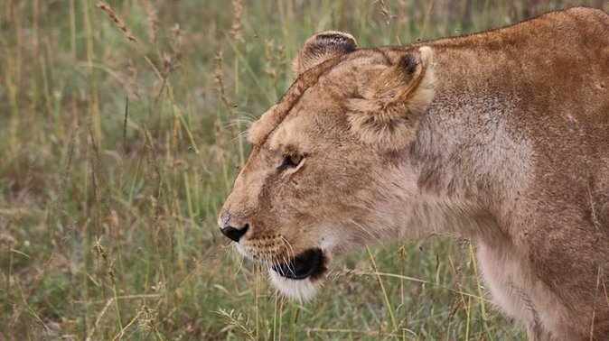 04 Days Masai Mara and Lake Nakuru