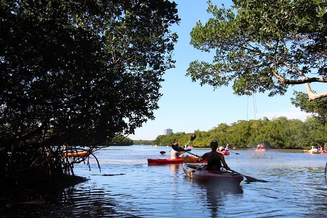 KAYAK TOUR - Mangrove Tunnels, Dolphin, Manatee and so much more!