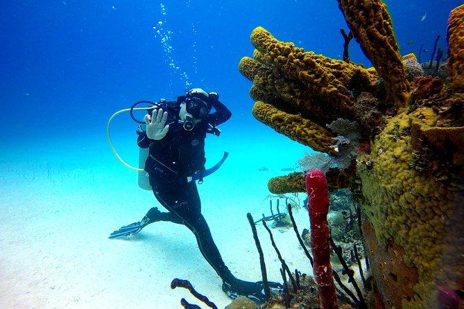 Catalina Island Diving