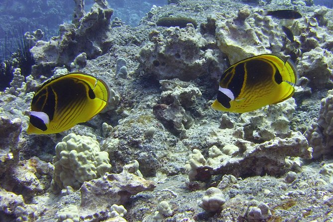 Glass-bottom Boat Reef Tour photo 11