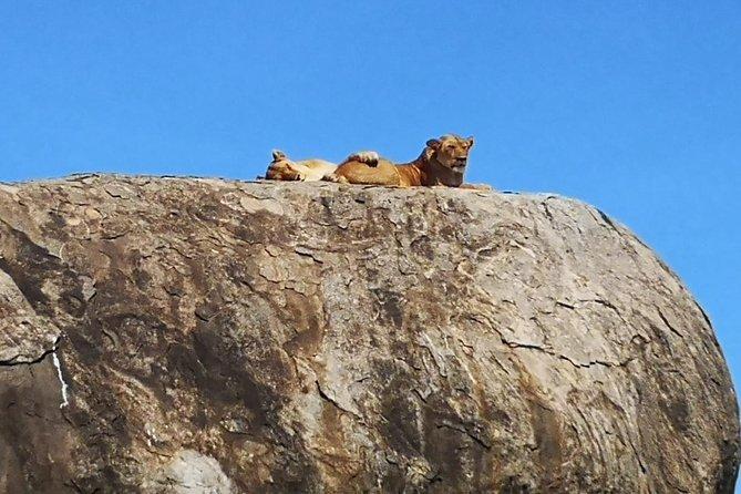 6 days safari Lake Manyara, Serengeti, Ngorongoro crater