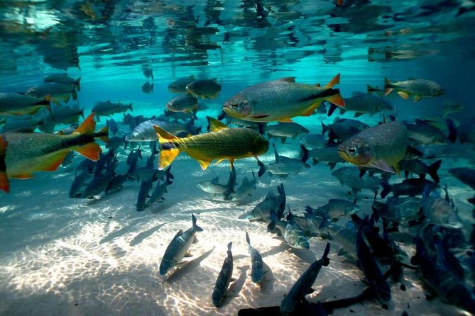 Natural Aquarium Admission Ticket in Bonito