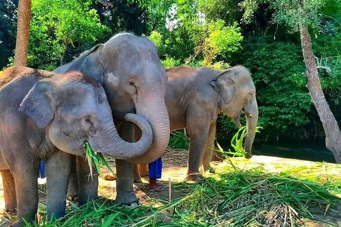 One day Elephant Experience In Chiang Mai, By Chiang Mai Elephant Home